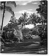 Lahaina Palm Shadows Acrylic Print