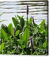 Lake Day Acrylic Print