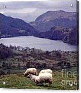 Lake Gwynant Snowdonia Wales Acrylic Print