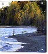 Lake Huron Shoreline In The Fall  Acrylic Print