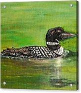 Lake Loon Acrylic Print