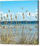 Lake Michigan Shore Grasses Acrylic Print