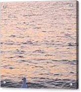 Lake Michigan Sunset With Birds Acrylic Print