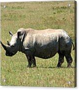 Lake Nakuru White Rhino Acrylic Print