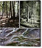 Lake Superior Hiking Trail Acrylic Print