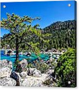 Lake Tahoe Bonsai Tree Acrylic Print by Scott McGuire