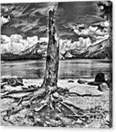 Lake Tenaya Giant Stump Black And White Acrylic Print