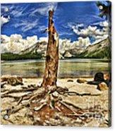 Lake Tenaya Giant Stump Acrylic Print