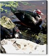 Lake Toho Ducks Acrylic Print