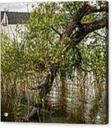 Lake Tree Acrylic Print