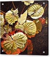 Lake Washington Lily Pad 11 Acrylic Print