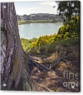 Lakeside Tree Acrylic Print
