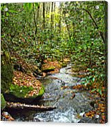 Lamance Creek  Acrylic Print