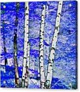 Land Of The Silver Birch Acrylic Print
