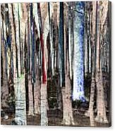 Landscape Forest Trees Acrylic Print