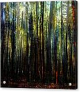 Landscape Forest Trees Tall Pine Acrylic Print
