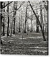Landscape In The Woods Acrylic Print