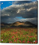 Landscape Of Poppy Fields In Front Of Mountain Range With Dramat Acrylic Print