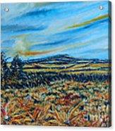 Landscape Sunflowers Field  Acrylic Print by Drinka Mercep