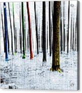 Landscape Winter Forest Pine Trees Acrylic Print