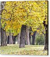 Landscape With Autumn Trees Acrylic Print