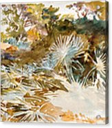 Landscape With Palmettos Acrylic Print