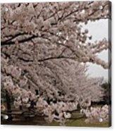 #landscape#japan#cherryblossom Acrylic Print