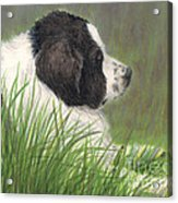 Landseer Newfoundland Dog In Grass Pets Animal Art Acrylic Print