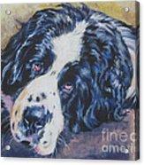 Landseer Newfoundland Dog Acrylic Print