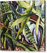 Languid Cactii Acrylic Print by Lisa Boyd