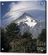 Lanin Volcano And Araucaria Trees Acrylic Print