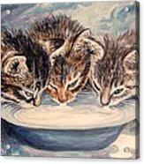 Lap Of Luxury Kittens Acrylic Print