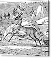 Laplander, C1785 Acrylic Print