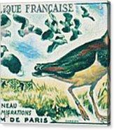Lapwings Study Of Migration Museum Of Paris Acrylic Print