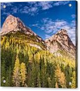 Larch On A Slope Acrylic Print