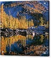 Larch Tree Reflection In Leprechaeun Lake  Acrylic Print