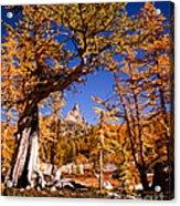 Larches Frame Prusik Peak Acrylic Print