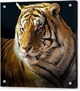 Large Cat Beauty Acrylic Print