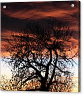 Large Cottonwood At Sunset Acrylic Print