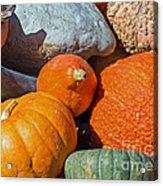 Large Edible Gourds Acrylic Print