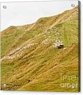 Large Flock Of Herded Sheep On A Steep Hillside Acrylic Print