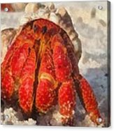 Large Hermit Crab On The Beach Acrylic Print
