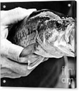 Large Mouth Bass Acrylic Print