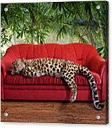 Large Pussy Cat - Leopard Sleeping Acrylic Print