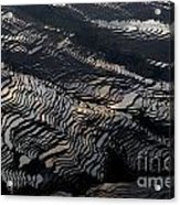 Large Scale Of Rice Terrace Acrylic Print
