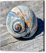 Large Snail Shell Acrylic Print