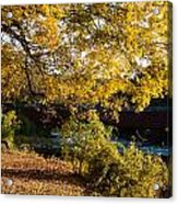 Large Spreading Oak On Banks Of West River West Cornwall Connecticut Acrylic Print by Robert Ford