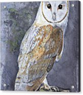 Large White Barn Owl Acrylic Print