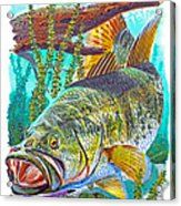 Largemouth Bass Acrylic Print