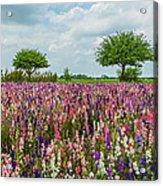 Larkspur Fields Forever Acrylic Print